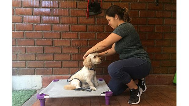 Majo Rivera enseña cómo lograr que el perro se quede tranquilo en su espacio.