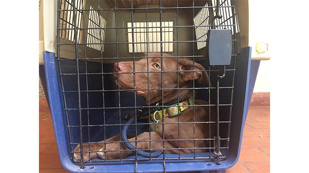 Según Rivera, el canil es un lugar seguro para el perro pues se convierte en su guarida.