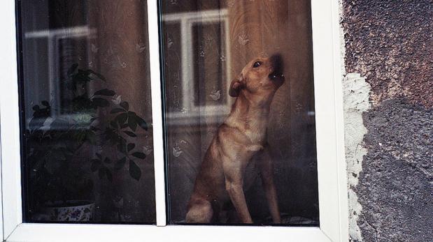 Cuando tu perro no sabe estar solo