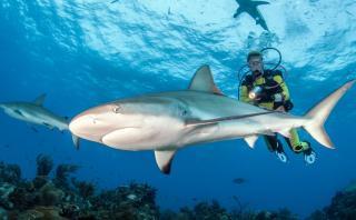 Asombrosos lugares donde los más avezados nadan con tiburones