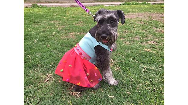 Prenda creada por alumnos del taller Dog Fashionista, del Instituto de Moda y Diseño MAD.