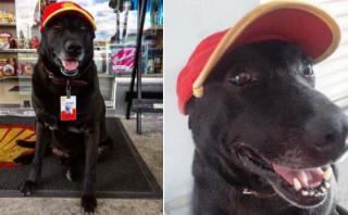 Perro abandonado ahora 'trabaja' en una gasolinera de Brasil