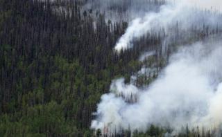 EE.UU.: Estado de Colorado tiene 834 mlls de árboles muertos