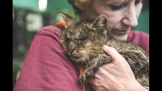 Gato enfermo fue rescatado y recibió caricias por primera vez