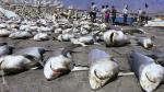 """Como pide """"Cebiche de Tiburón"""", Produce regulará esta pesquería - Noticias de aleta de tiburón"""