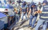 Intervienen nave ecuatoriana con 5 toneladas de pesca ilegal