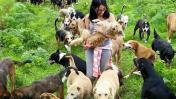 Paseadores de perros serán más solicitados que maestros en EEUU