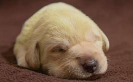 YouTube: cachorro con pelaje verde asombra a internautas