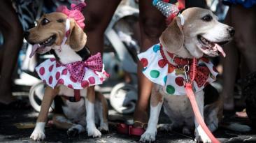 Brasil: El desfile canino del carnaval de Río de Janeiro
