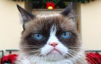 Conoce a los gatos más populares de todo internet [FOTOS]