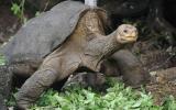 El cuerpo del Solitario George regresa a las Islas Galápagos