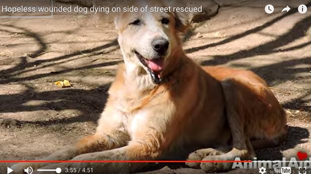 [Foto] Rescate de un perro que fue abandonado a morir