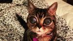 Conoce a los gatos más populares de todo internet [FOTOS] - Noticias de día internacional del gato