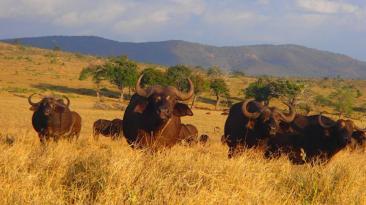 Hombre socorre a animales sedientos llevándoles agua en África