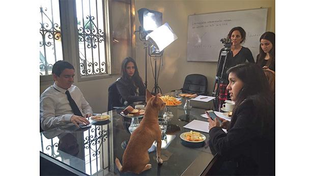 En esta escena Animal Action Films trabajó con 'Chipi', un Chihuahua que salió en una filmación para un proyecto universitario.