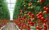 La revolución de los invernaderos high-tech