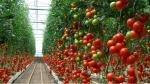 La revolución de los invernaderos high-tech - Noticias de insecto gigante