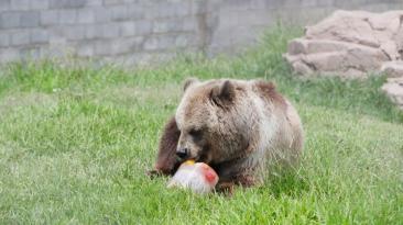 Parque de las Leyendas: animales comen dieta especial por calor