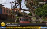 Surco: árbol aplastó vehículo estacionado en parque