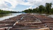 Persiste amenaza de tala ilegal contra Reserva Pacaya Samiria