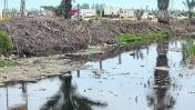 Camal y botadero contaminan los Pantanos de Villa