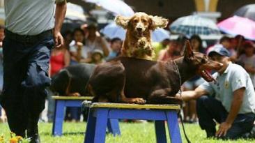 Centro de Lima: canes se robaron el show en la Plaza de Armas