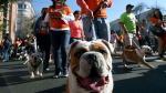 México: Más de 900 bulldogs buscan romper un récord Guinness - Noticias de michael jackson