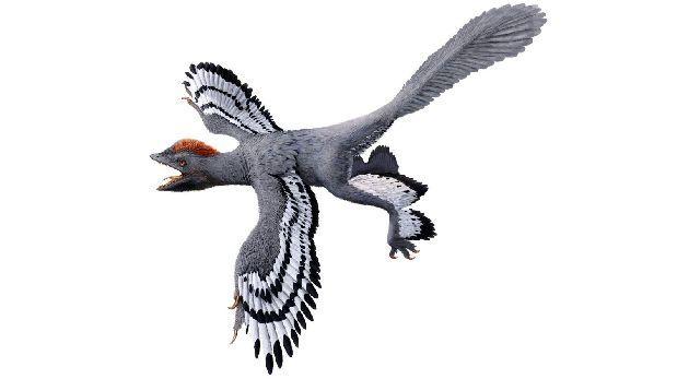 China: Descubren nuevas características de dinosaurio emplumado
