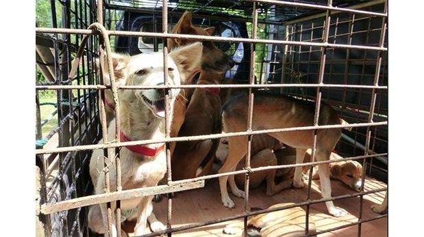 Cambió su vida por salvar perros en Sri Lanka