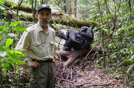 Ngogo, el reino oculto de los chimpancés
