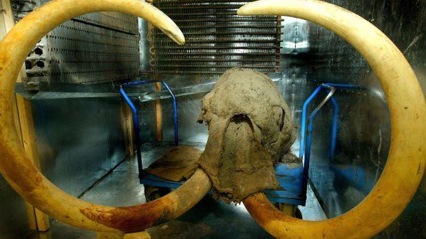 Mamuts sufrieron mutaciones genéticas antes de extinguirse