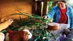 Oxfam: Una de cada tres mujeres no cuenta con ingresos propios - Noticias de comisión multisectorial de agricultura familiar