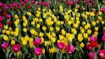 ¿Tu cuerpo se puede convertir en un jardín tras la muerte? - Noticias de jason leach