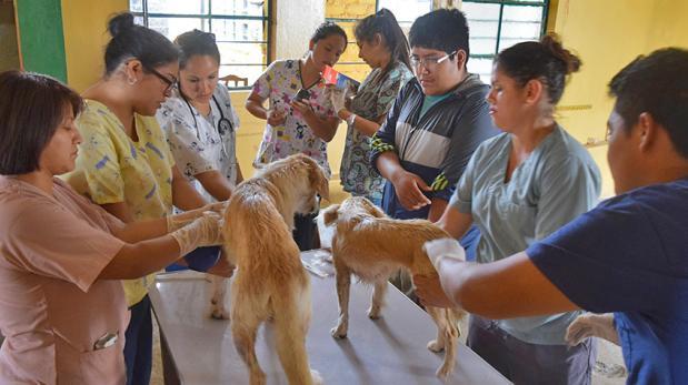 Tarpuy siembra esperanza a mascotas de bajos recursos