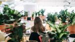 Nuevo concepto: Oficina-invernadero acoge mil plantas - Noticias de coworking