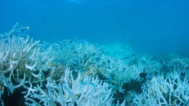 Arrecifes de la Gran Barrera de Coral vuelven a blanquearse
