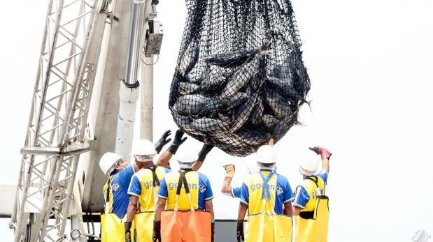 Embarcaciones extranjeras pagarán menos por derecho de pesca