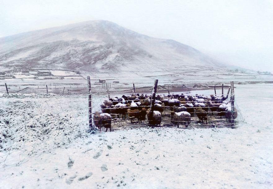 Nevada cubrió la provincia de Cotabambas. Los distritos de Coyllurqui, Haquira, Mara y Challhuahuacho, en la provincia de Cotabambas (región Apurímac), soportaron una intensa nevada que obligó a suspender el servicio de luz eléctrica y las clases escolares. (Foto: Cortesía)
