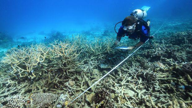 El terrible año de la Gran Barrera de Coral
