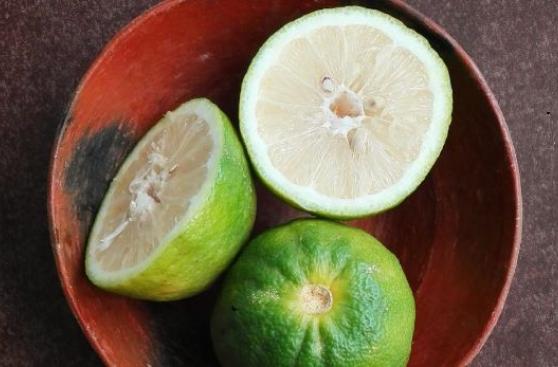 Cebiche: a falta de limón, bueno es camu camu