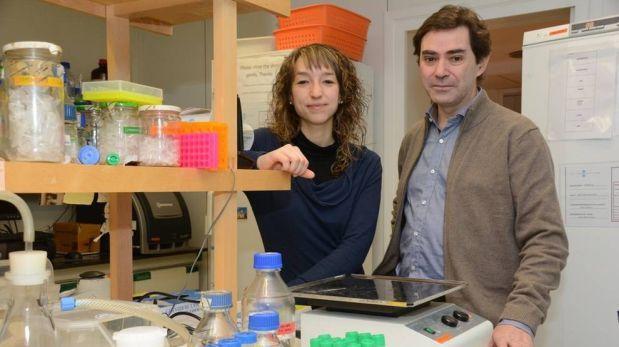 Huntington altera neuronas desde que inician su desarrollo