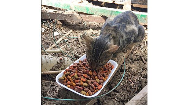 [Foto] ¿Por qué adoptar a un animal víctima de un huaico?