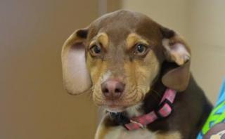 Facebook: perro salvó la vida de una niña de tres años