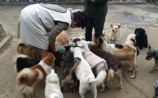 YouTube: mujer lo deja todo para cuidar decenas de perros