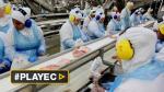 Ministro brasileño visita planta de pollo entre crisis de carne - Noticias de argentina