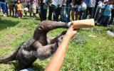 Zoológico de Huachipa quedó a salvo de huaicos y desbordes