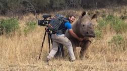 Mira cómo un rinoceronte pide que le rasquen la panza [VIDEO]