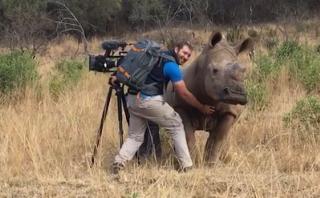 YouTube: mira cómo un rinoceronte pide que le rasquen la panza