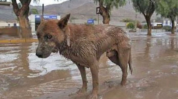 [Foto] Tu mascota y tú ante una emergencia