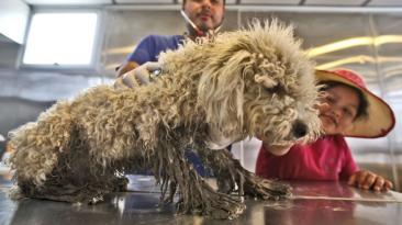 Carapongo: mascotas también son víctimas de huaicos y desbordes